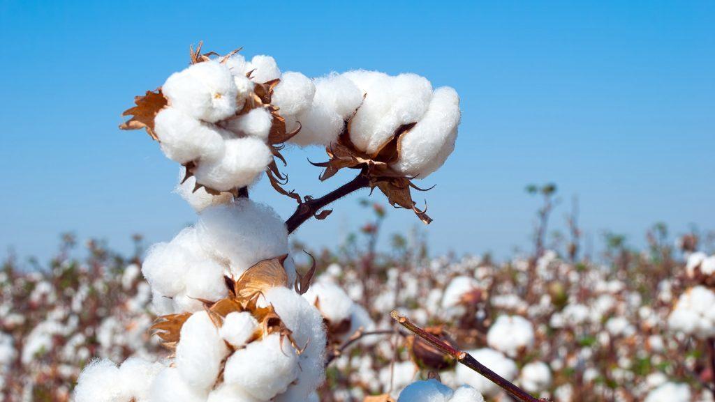 may quần áo thể thao bằng chất liệu cotton